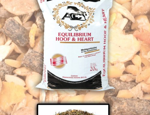 Hoof&Heart