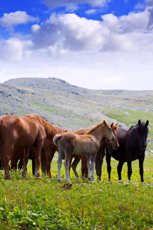 alimentos para caballo para cualquier actividad.