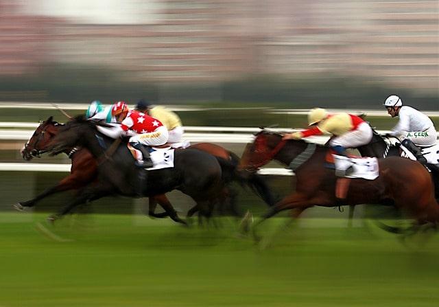 La alimentación del caballo de competición