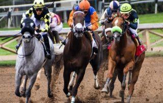 Productos para el caballo de competición