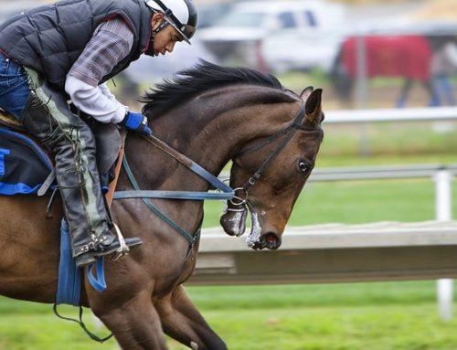 Requerimientos nutricionales del caballo de competición