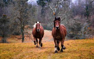 La alimentación del caballo en invierno