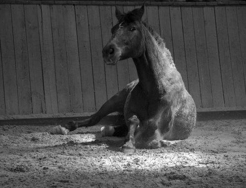 Principales lesiones en los caballos