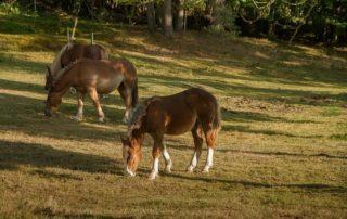 piensos para una buena alimentación del caballo