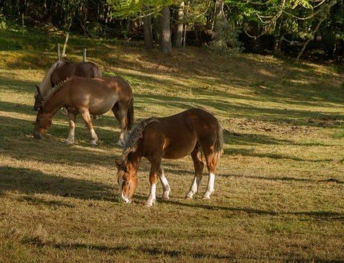 Piensos para caballos